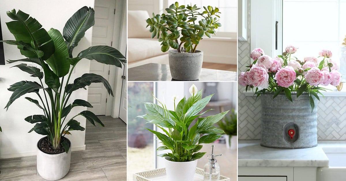 Best Vastu Plants For Home