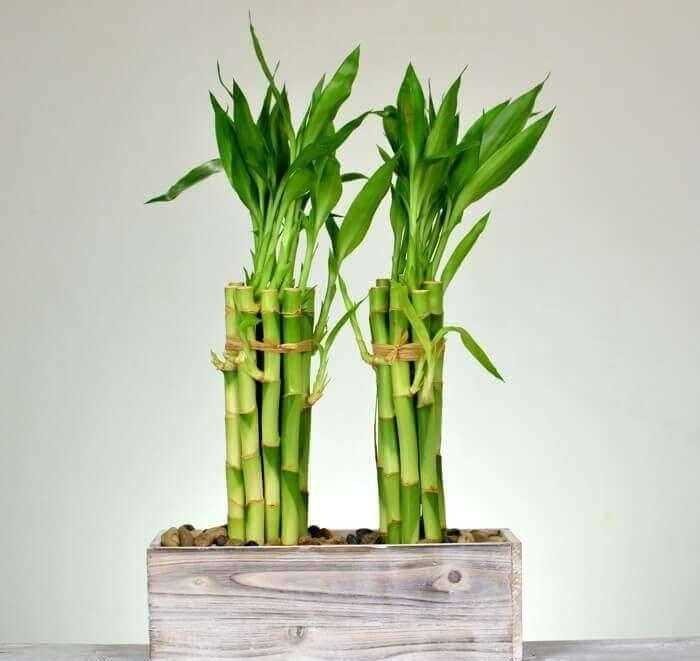 Vastu Plants For Home